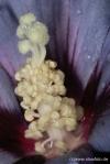 Blüten 8