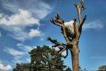 IMG_8183_DxO.top_Snapseed.top