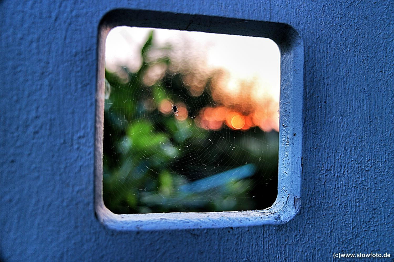 IMG_3068_Snapseed.top