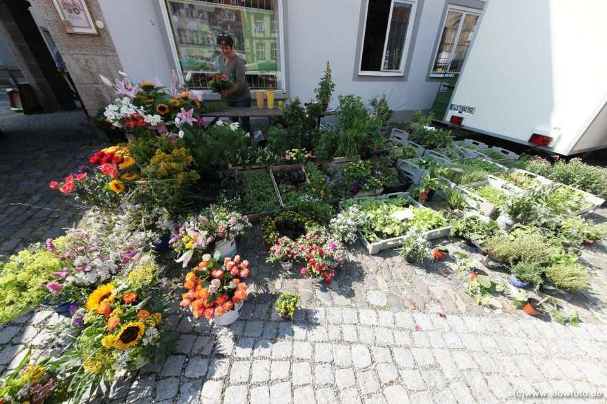 Pflanzen im Angebot
