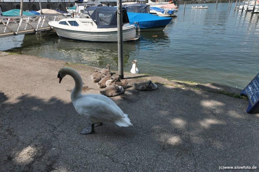 8 Besucher = 1 Familie