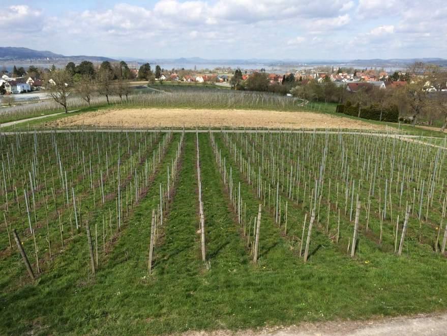 Weinbau und Blick auf die Hörie
