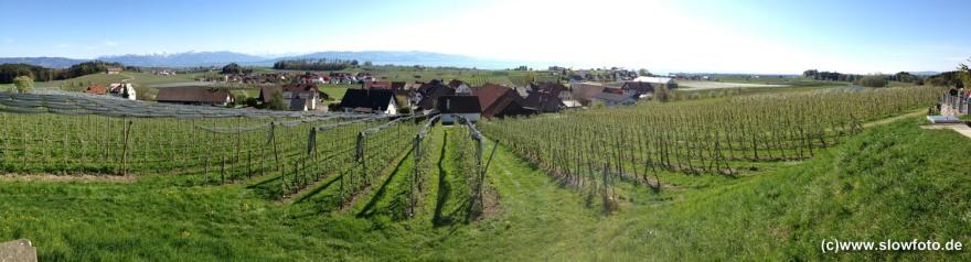 Hauptsache der Wein wächst gut