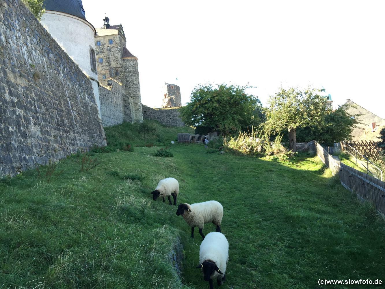 heute dürfen die Schafe hier friedlich grasen
