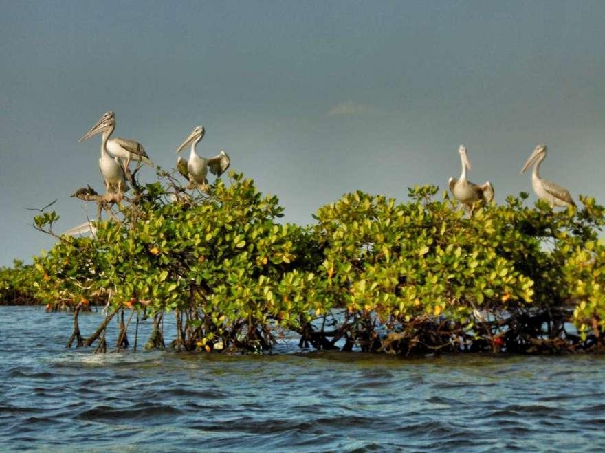 Senegal - Sine Saloum Delta - Vögel