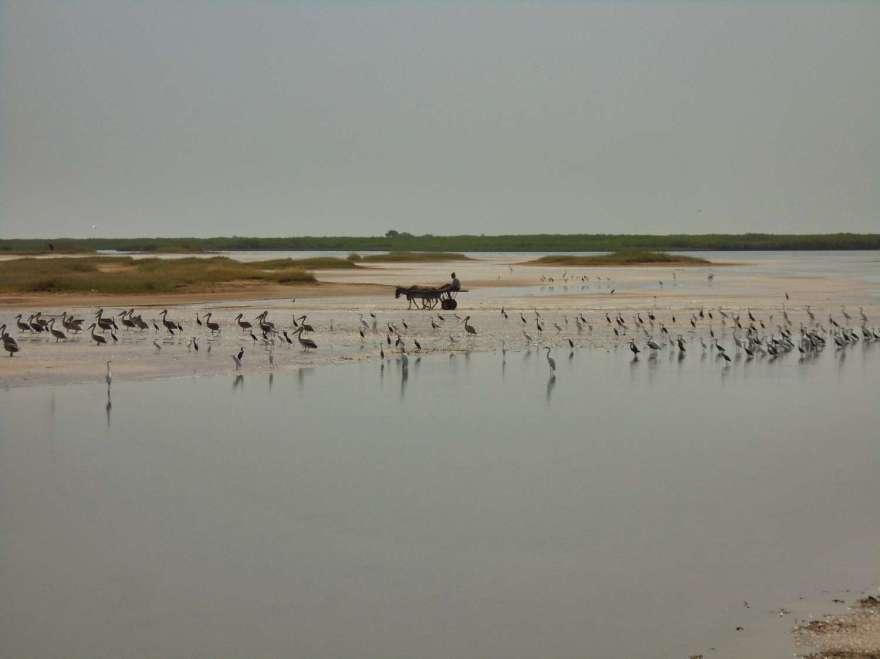 Senegal - Sine Saloum Delta