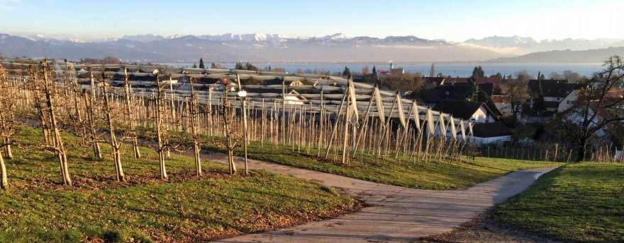 Äpfel Wein Wasser Kultur Berge