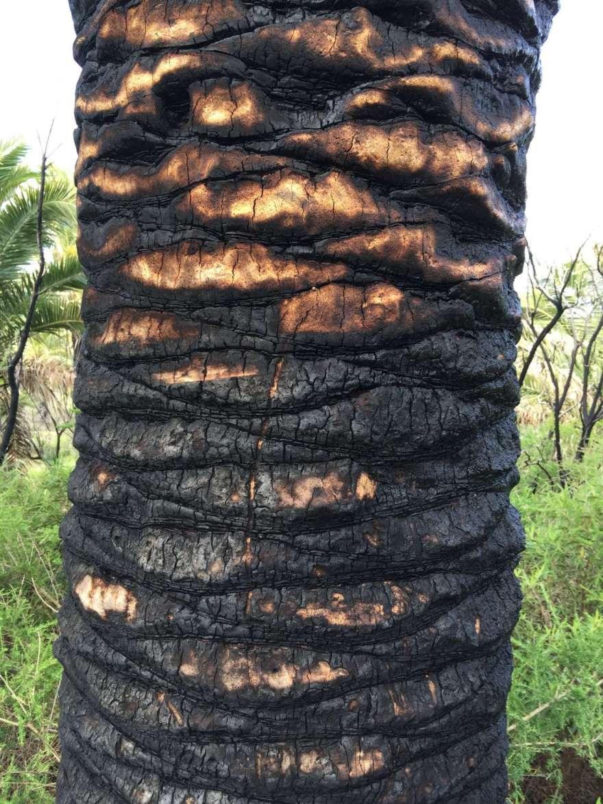 Brände gab es nahezu überall