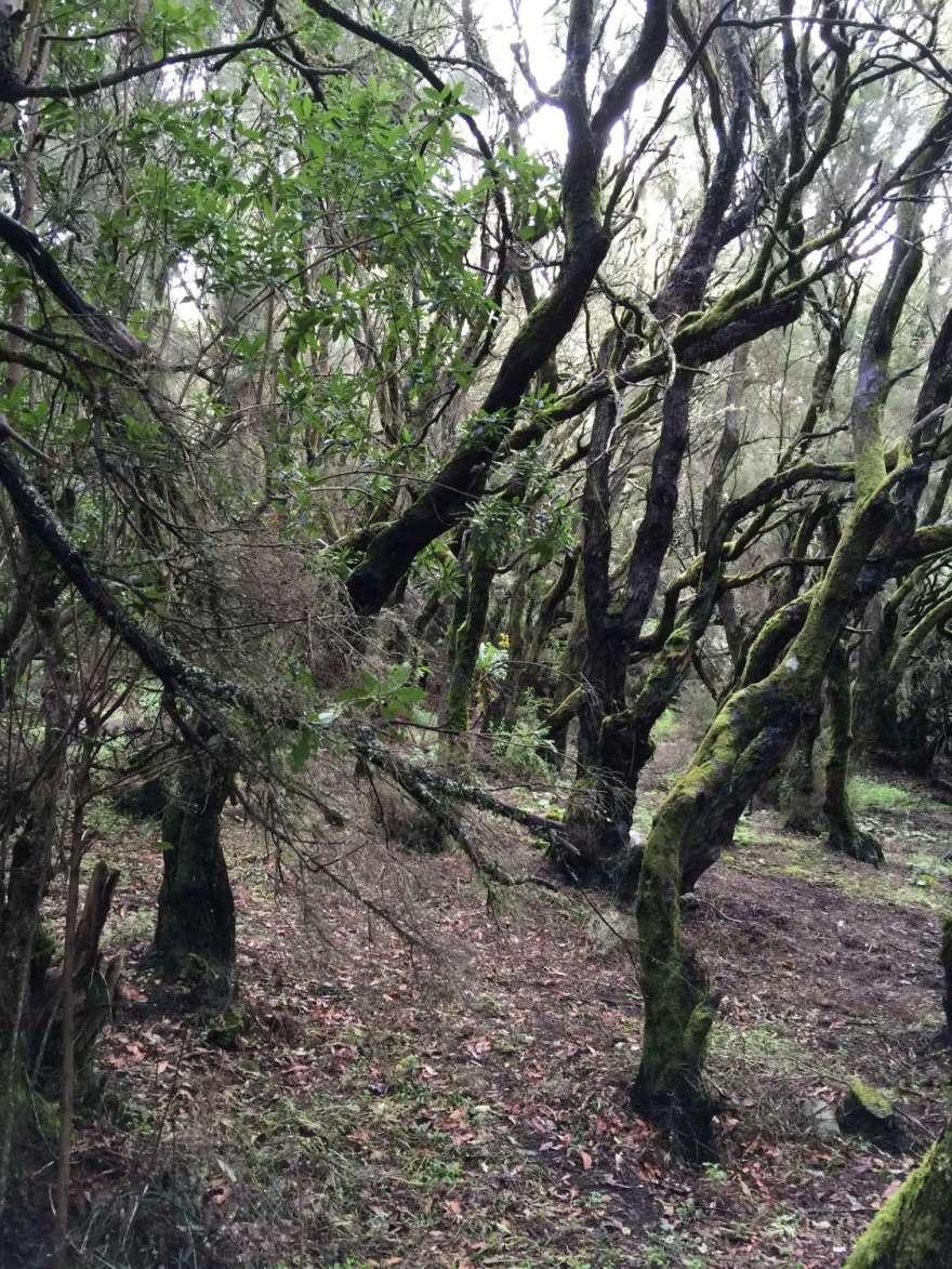 und der Wald erholt sich wieder