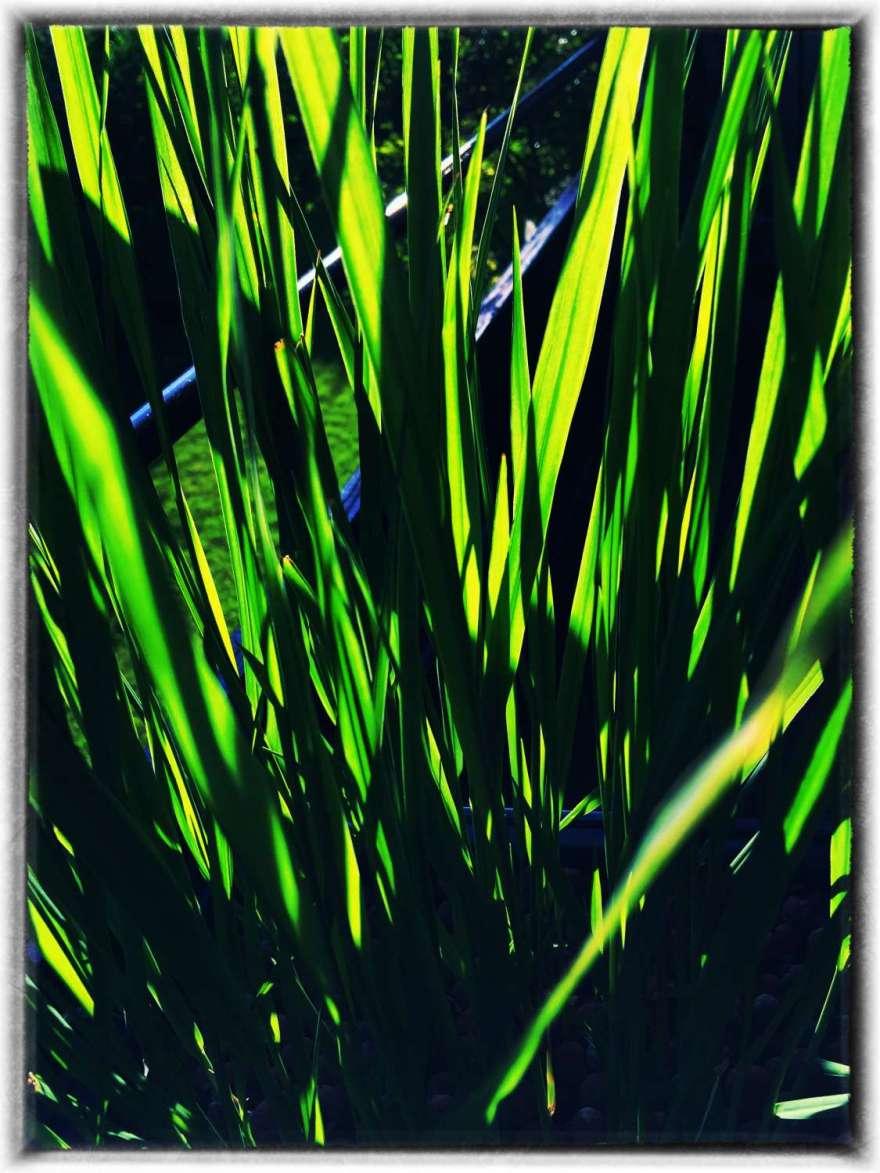 Grasanbau ist jetzt erlaubt :-)