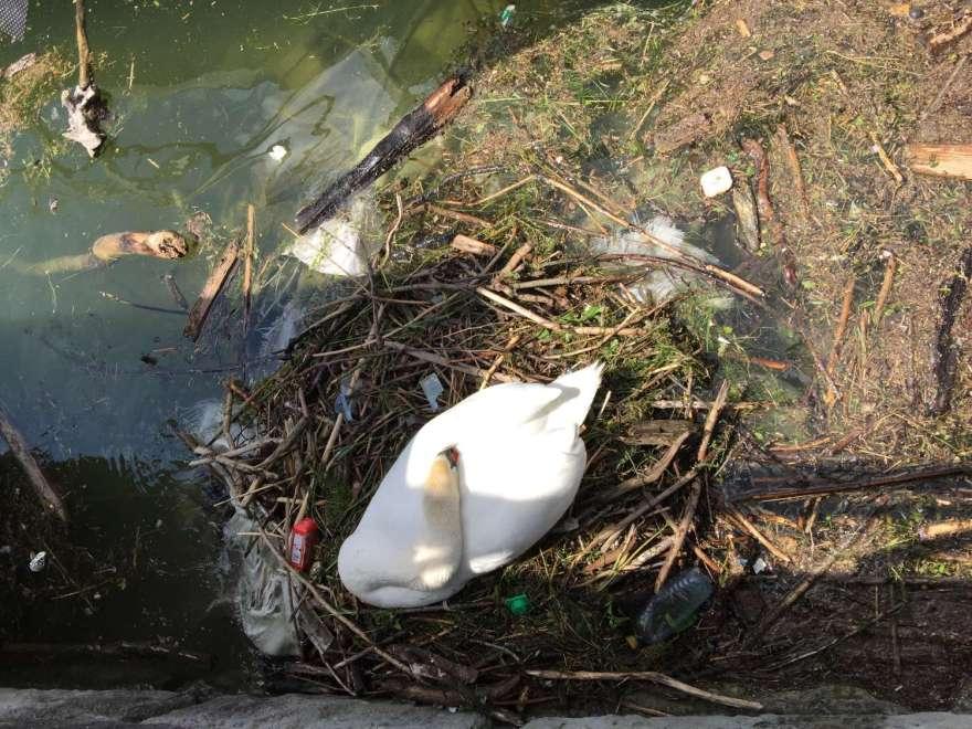 Nestbau im Lindauer Hafen
