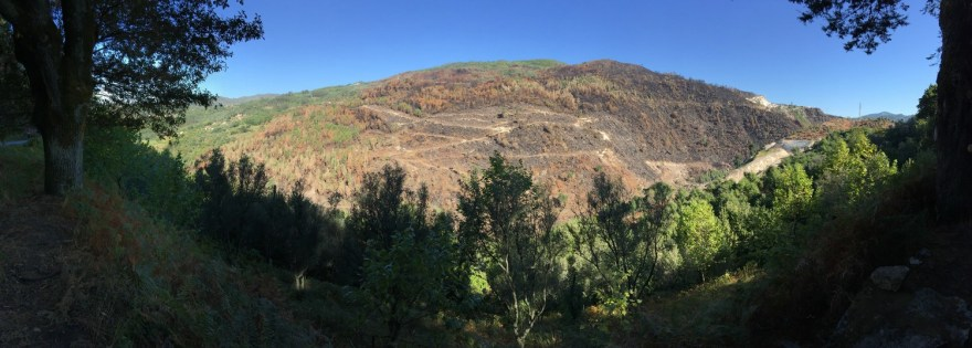 großflächige Waldbrände